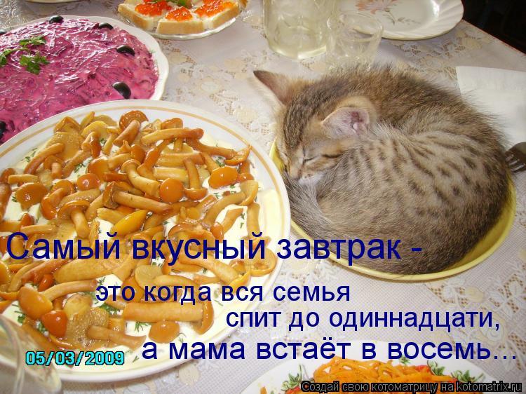Котоматрица: это когда вся семья  спит до одиннадцати, а мама встаёт в восемь... Самый вкусный завтрак -