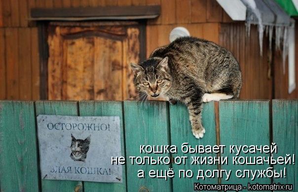 Котоматрица: кошка бывает кусачей не только от жизни кошачьей! а ещё по долгу службы!