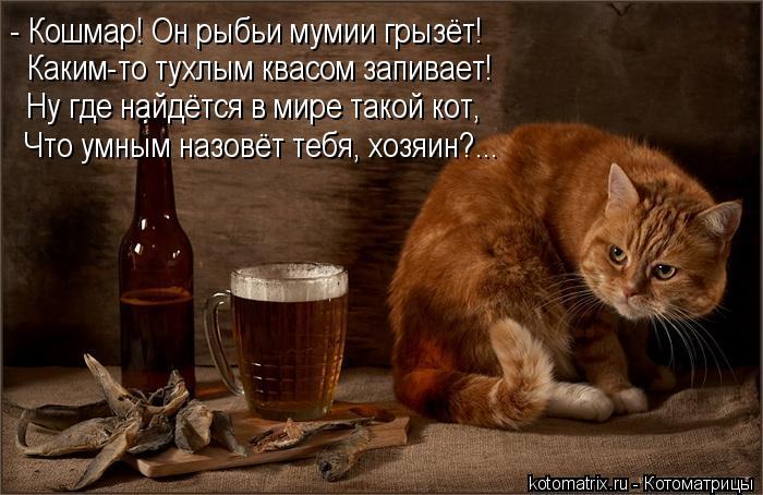 Котоматрица: - Кошмар! Он рыбьи мумии грызёт! Каким-то тухлым квасом запивает! Ну где найдётся в мире такой кот, Что умным назовёт тебя, хозяин?...