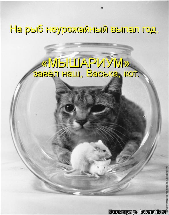 Котоматрица: На рыб неурожайный выпал год, «МЫШАРИУМ»   завёл наш, Васька, кот.
