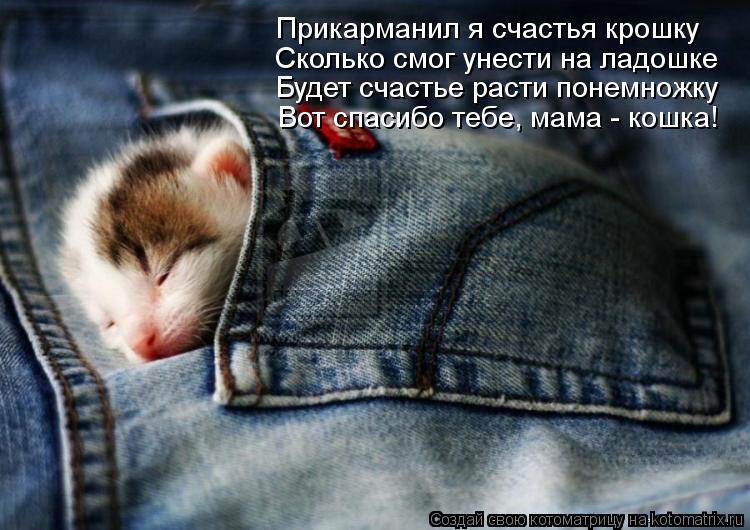 Котоматрица: Прикарманил я счастья крошку Сколько смог унести на ладошке Будет счастье расти понемножку  Вот спасибо тебе, мама - кошка!