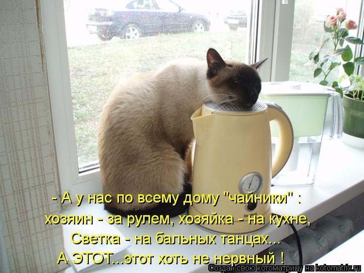 """Котоматрица: - А у нас по всему дому """"чайники"""" : хозяин - за рулем, хозяйка - на кухне, Светка - на бальных танцах... А ЭТОТ...этот хоть не нервный !"""