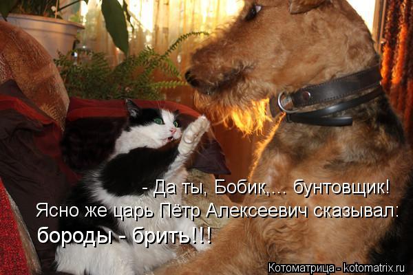 Котоматрица: - Да ты, Бобик,... бунтовщик! Ясно же царь Пётр Алексеевич сказывал:  бороды - брить!!!