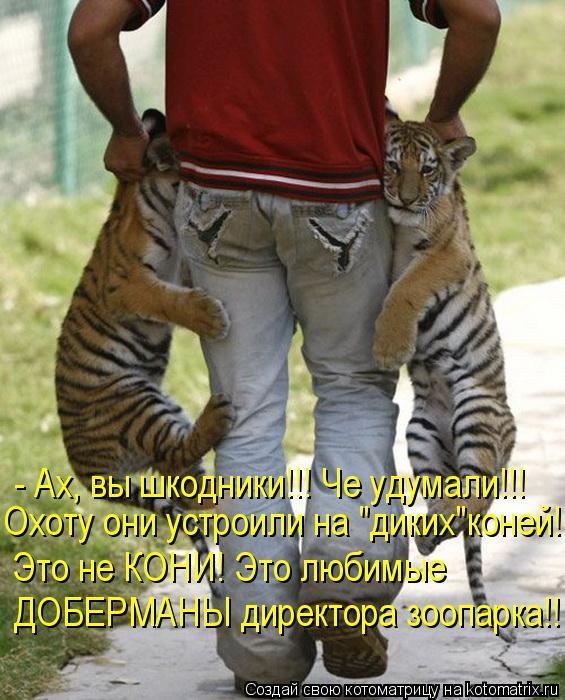"""Котоматрица: - Ах, вы шкодники!!! Че удумали!!! Охоту они устроили на """"диких""""коней!!!  Это не КОНИ! Это любимые   ДОБЕРМАНЫ директора зоопарка!!"""