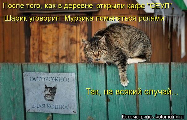 """Котоматрица: Так, на всякий случай... После того, как в деревне  открыли кафе """"СЕУЛ"""", Шарик уговорил  Мурзика поменяться ролями."""