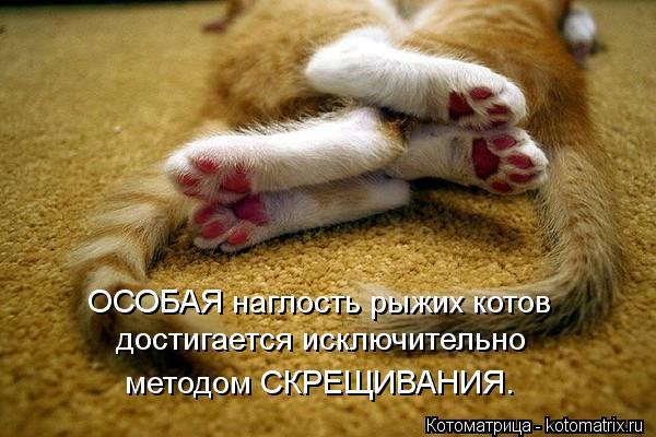 Котоматрица: ОСОБАЯ наглость рыжих котов достигается исключительно методом СКРЕЩИВАНИЯ.