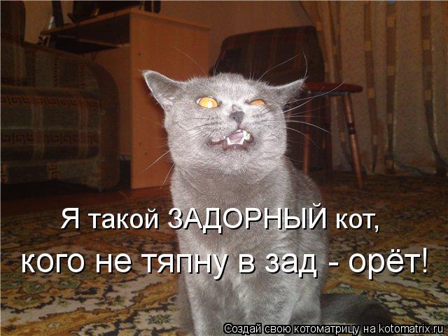 Котоматрица: Я такой ЗАДОРНЫЙ кот, кого не тяпну в зад - орёт!