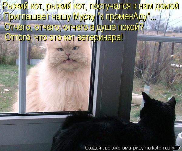 """Котоматрица: Рыжий кот, рыжий кот, постучался к нам домой Приглашает нашу Мурку """"к променАду""""... Отчего, отчего, отчего в душе покой? Оттого, что это кот вет"""