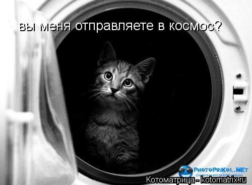 Котоматрица: вы меня отправляете в космос?