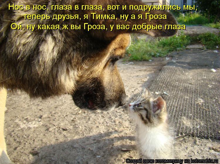 Котоматрица: Нос в нос, глаза в глаза, вот и подружились мы, теперь друзья, я Тимка, ну а я Гроза Ой, ну какая ж вы Гроза, у вас добрые глаза