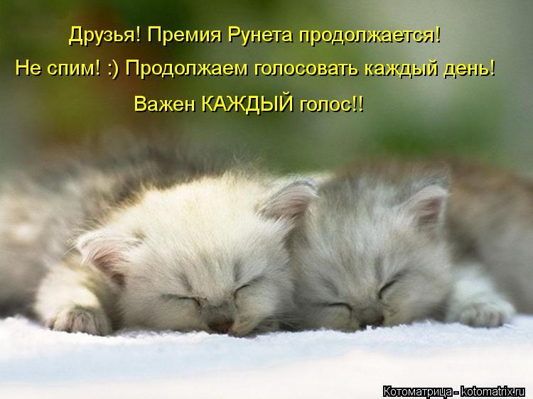 Котоматрица: Друзья! Премия Рунета продолжается! Не спим! :) Продолжаем голосовать каждый день! Важен КАЖДЫЙ голос!!