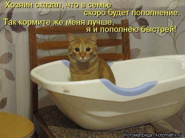 Котоматрица: Хозяин сказал, что в семье  скоро будет пополнение. Так кормите же меня лучше,  я и пополнею быстрей!