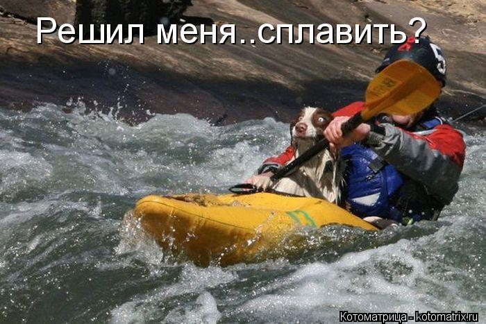 http://kotomatrix.ru/images/lolz/2012/11/14/kotomatritsa_S2.jpg