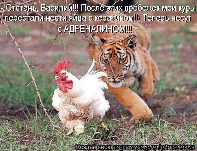 Котоматрица: - Отстань, Василий!!! После этих пробежек мои куры  перестали нести яйца с кератином!!! Теперь несут с АДРЕНАЛИНОМ!!!