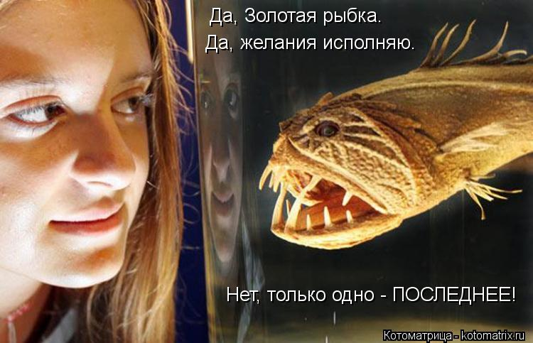 Котоматрица: Да, Золотая рыбка. Да, желания исполняю. Нет, только одно - ПОСЛЕДНЕЕ!