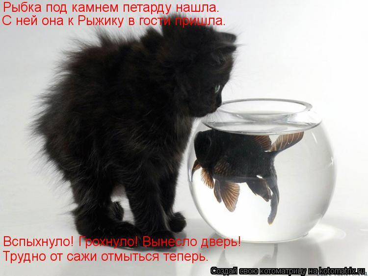 Котоматрица: Рыбка под камнем петарду нашла. С ней она к Рыжику в гости пришла. Вспыхнуло! Грохнуло! Вынесло дверь! Трудно от сажи отмыться теперь.