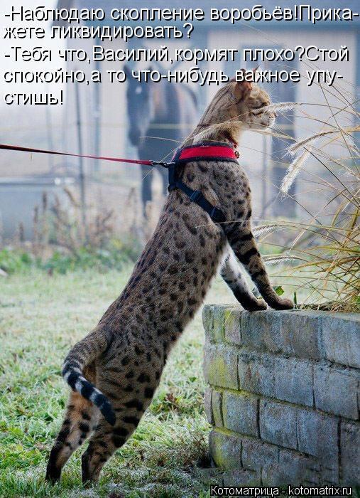 Котоматрица: -Наблюдаю скопление воробьёв!Прика- жете ликвидировать? -Тебя что,Василий,кормят плохо?Стой спокойно,а то что-нибудь важное упу- стишь!