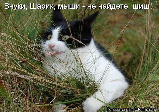 Котоматрица: Внуки, Шарик, мыши - не найдете, шиш!