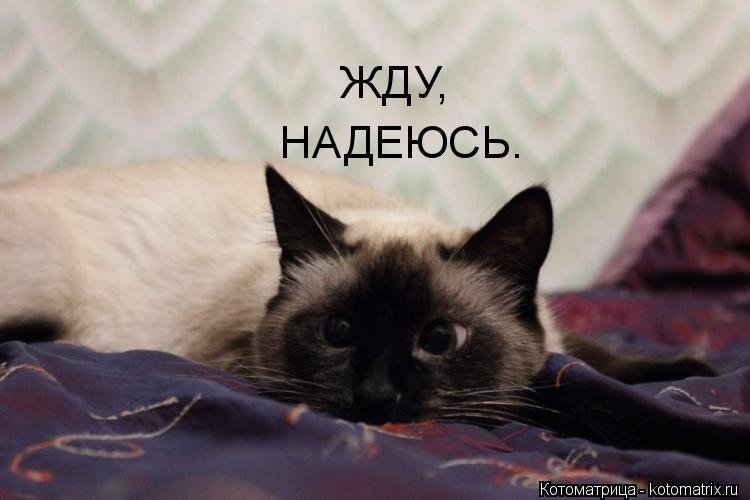kotomatritsa_grd.jpg