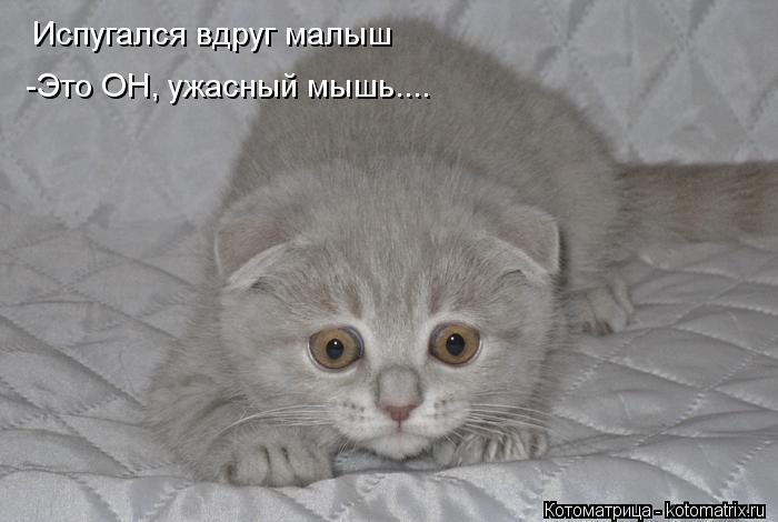Котоматрица: Испугался вдруг малыш -Это ОН, ужасный мышь....