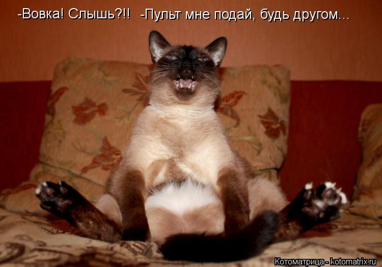 Котоматрица: -Пульт мне подай, будь другом... -Вовка! Слышь?!!