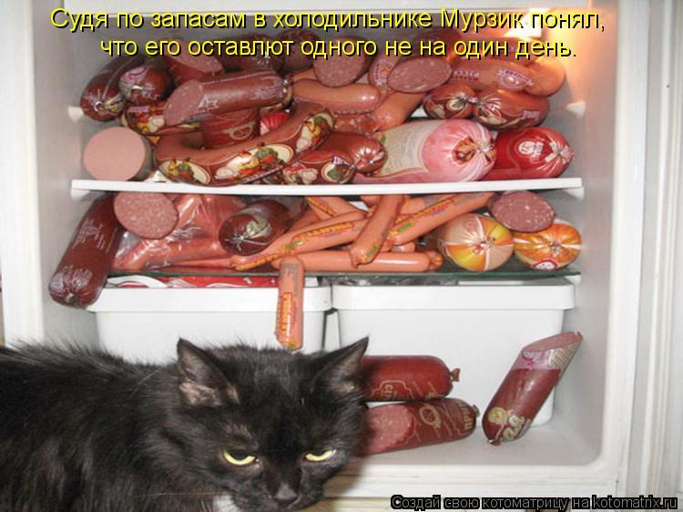 Котоматрица: Судя по запасам в холодильнике Мурзик понял, Судя по запасам в холодильнике Мурзик понял, что его оставлют одного не на один день.