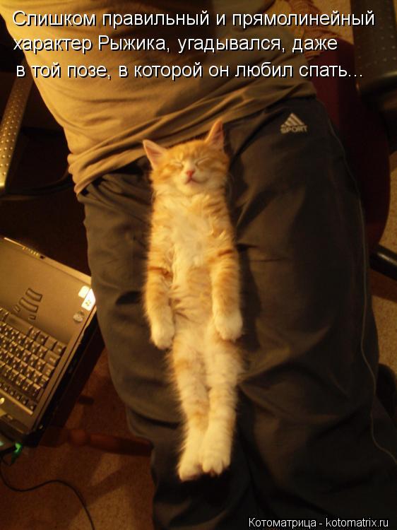 Котоматрица: Слишком правильный и прямолинейный  характер Рыжика, угадывался, даже в той позе, в которой он любил спать...