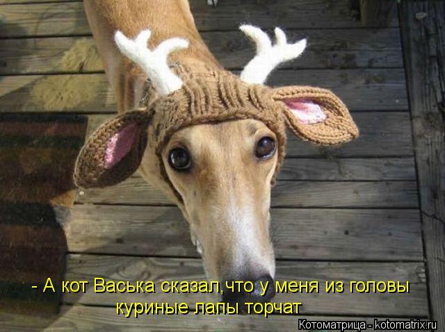 Котоматрица: - А кот Васька сказал,что у меня из головы куриные лапы торчат
