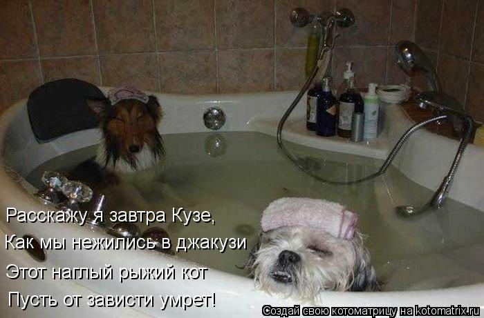 Котоматрица: Расскажу я завтра Кузе, Как мы нежились в джакузи Этот наглый рыжий кот Пусть от зависти умрет!