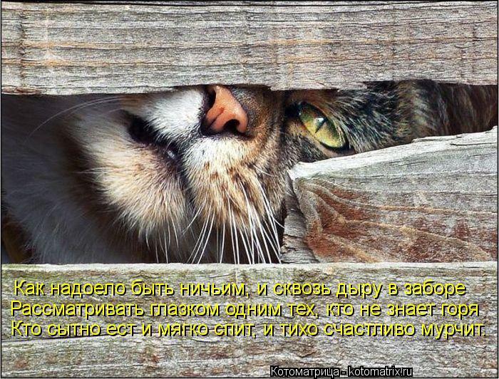 Котоматрица: Как надоело быть ничьим, и сквозь дыру в заборе  Рассматривать глазком одним тех, кто не знает горя Кто сытно ест и мягко спит, и тихо счастли
