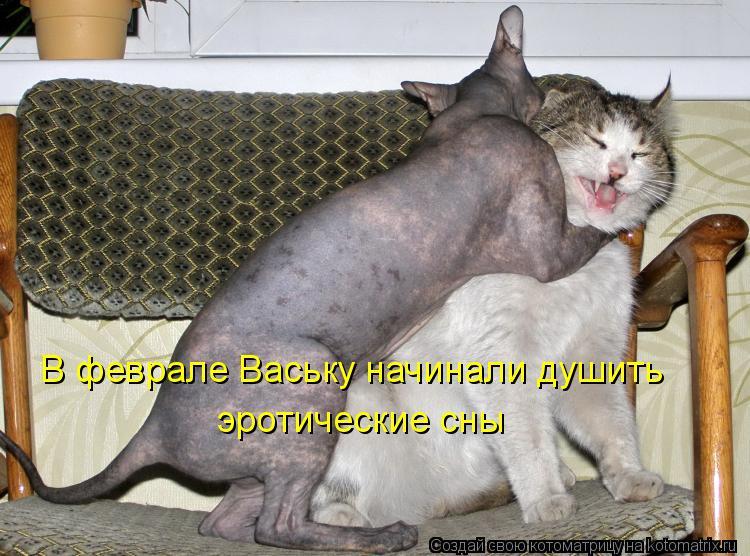 Котоматрица: В феврале Ваську начинали душить эротические сны