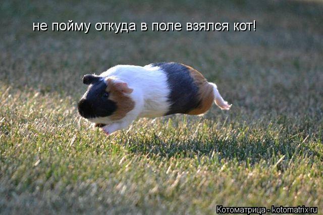 Котоматрица: не пойму откуда в поле взялся кот!