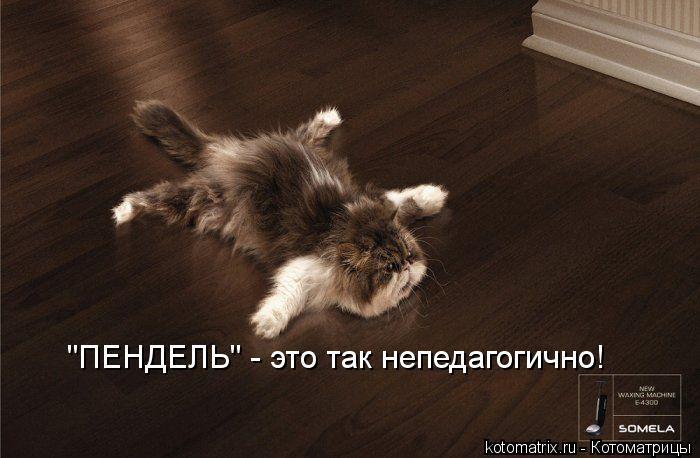 """Котоматрица: """"ПЕНДЕЛЬ"""" - это так непедагогично!"""