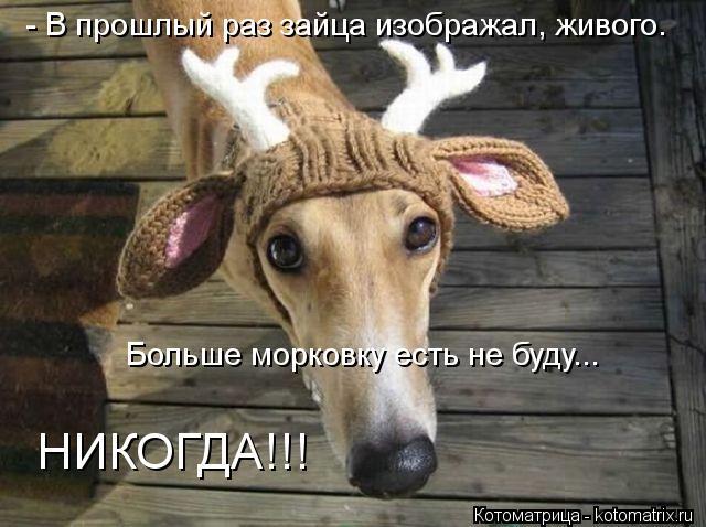 Котоматрица: - В прошлый раз зайца изображал, живого. Больше морковку есть не буду... НИКОГДА!!!