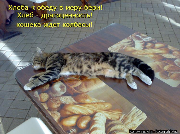 Котоматрица: Хлеба к обеду в меру бери! Хлеб - драгоценность! кошека ждет колбасы!