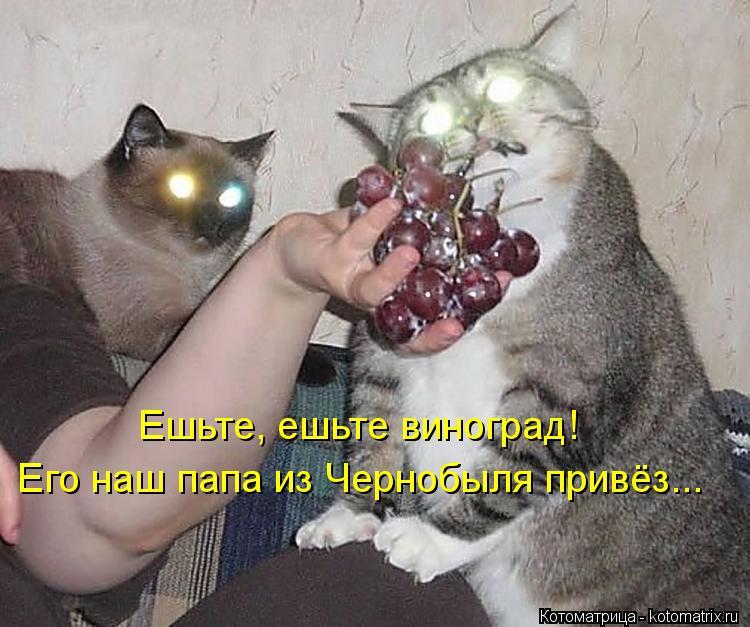 Котоматрица: Ешьте, ешьте виноград! Его наш папа из Чернобыля привёз...