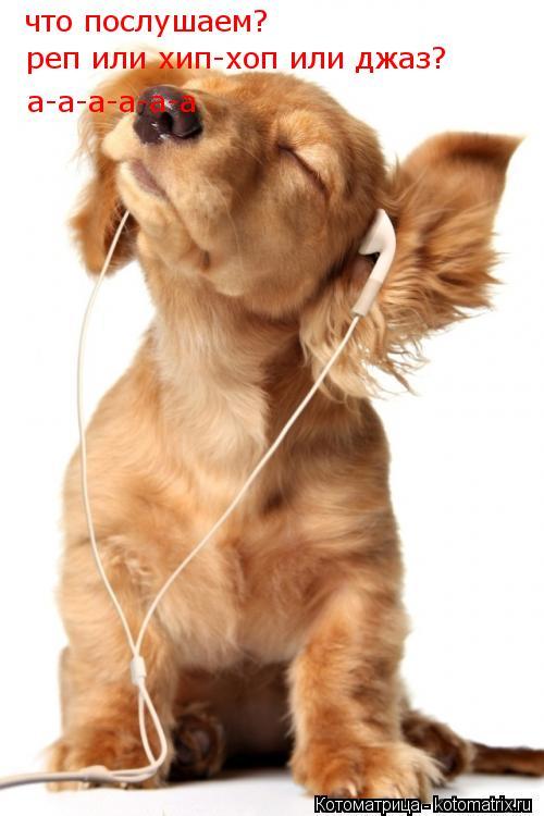 Котоматрица: что послушаем? реп или хип-хоп или джаз? а-а-а-а-а-а