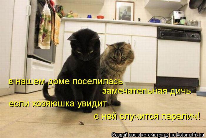 Котоматрица: в нашем доме поселилась  замечательная дичь если хозяюшка увидит с ней случится паралич!