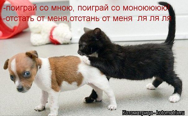 Котоматрица: -поиграй со мною, поиграй со моноюююю! -отстать от меня,отстань от меня  ля ля ля