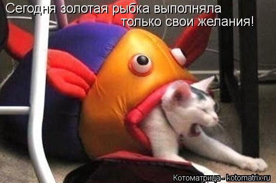 Котоматрица: Сегодня золотая рыбка выполняла  только свои желания!