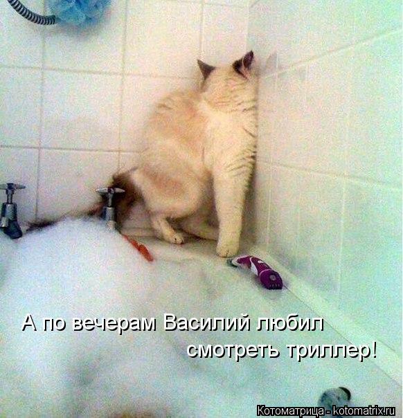 Котоматрица: А по вечерам Василий любил смотреть триллер!