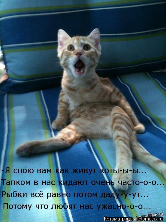 Котоматрица: Потому что любят нас ужасно-о-о... Рыбки всё равно потом даду-у-ут... Тапком в нас кидают очень часто-о-о... -Я спою вам как живут коты-ы-ы...