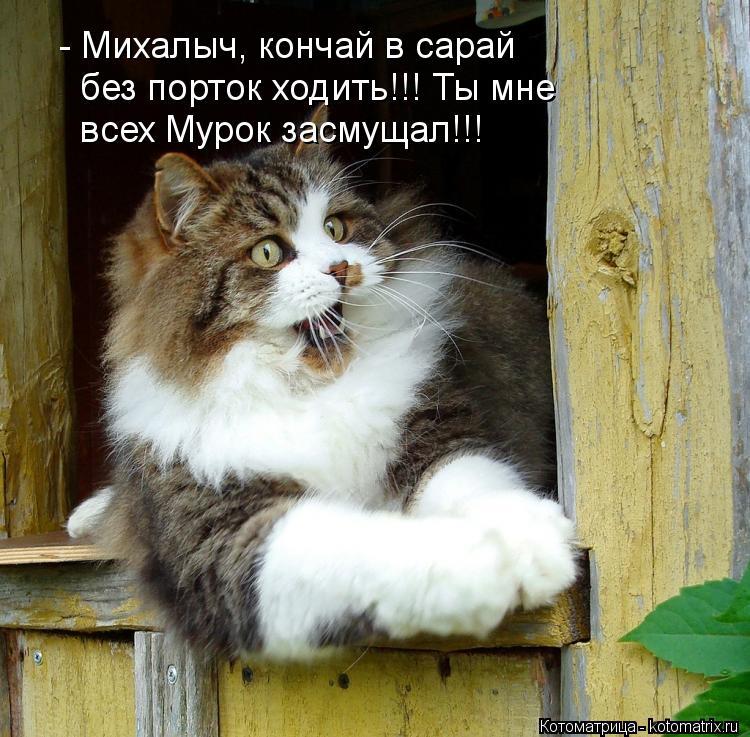Котоматрица: - Михалыч, кончай в сарай без порток ходить!!! Ты мне всех Мурок засмущал!!!