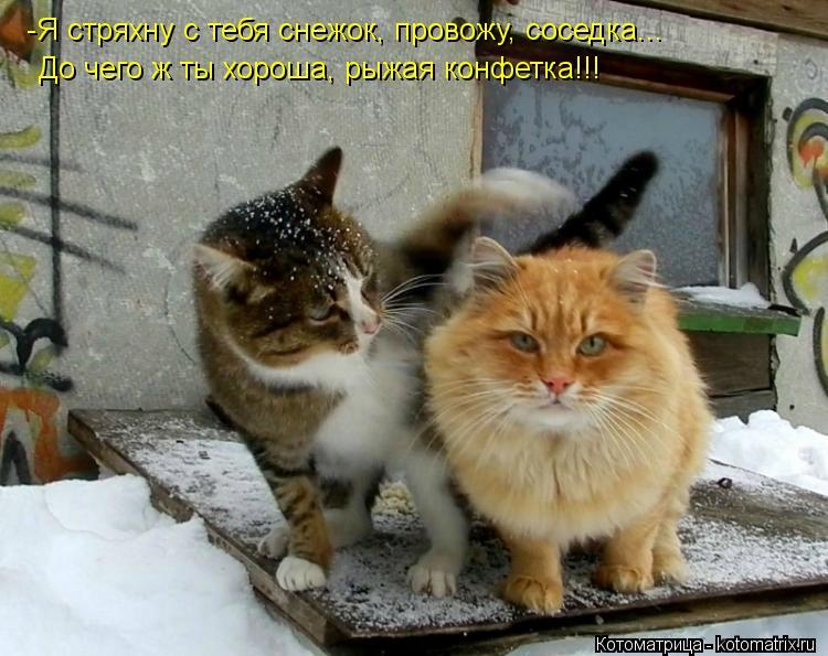 Котоматрица: -Я стряхну с тебя снежок, провожу, соседка... До чего ж ты хороша, рыжая конфетка!!!