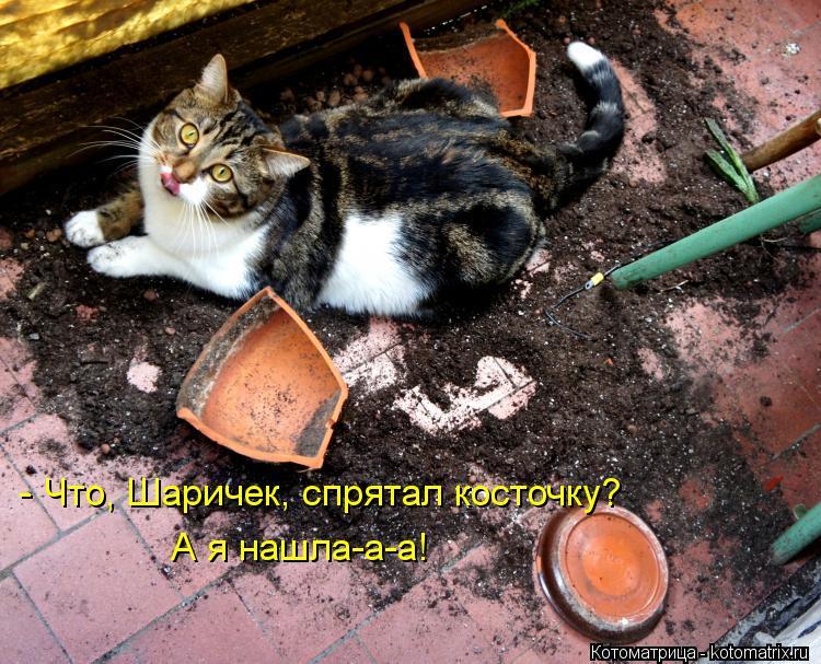 Котоматрица: - Что, Шаричек, спрятал косточку? А я нашла-а-а!
