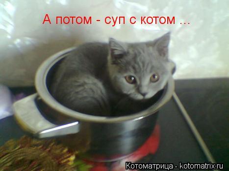 Котоматрица: А потом - суп с котом ...