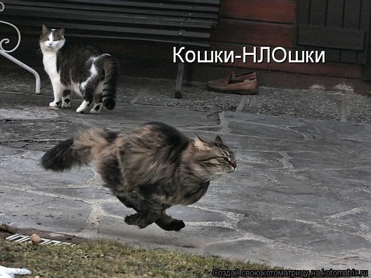 не важно какого цвета кошка лишь бы ловила мышей