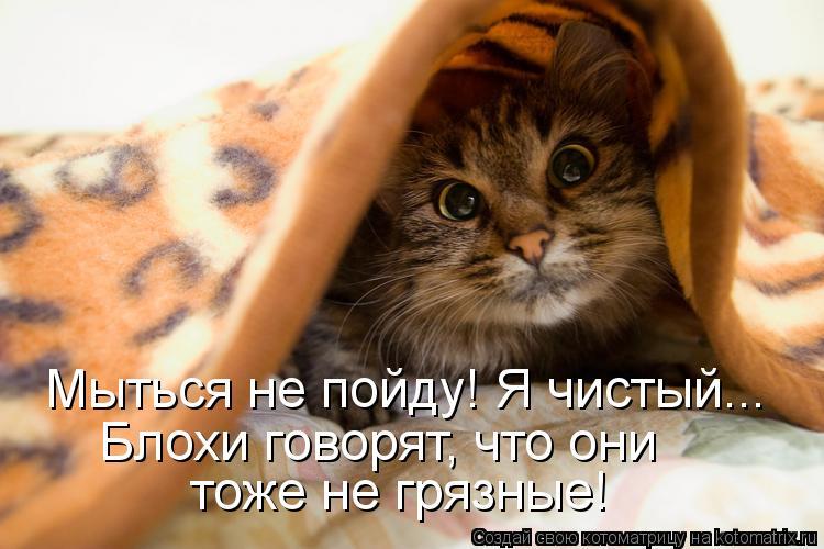 Котоматрица: Мыться не пойду! Я чистый... Блохи говорят, что они  тоже не грязные!