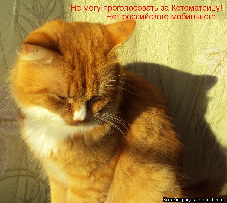 Котоматрица: Не могу проголосовать за Котоматрицу! Нет российского мобильного...