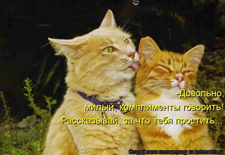 Котоматрица: -Довольно,  милый, комплименты говорить! Рассказывай, за что тебя простить...